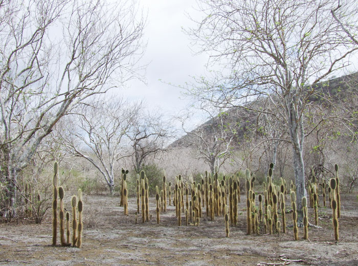 Ziegeninsel Bild